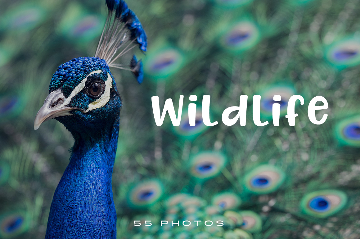 Wildlife stock photo pack has 55 amazing photo stock. Nothing can be compared with nature. it boosts our inspiration. Get inspirational nature and beast images