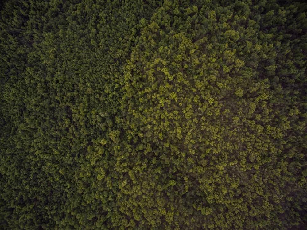 jev lueyjoe ozark drones