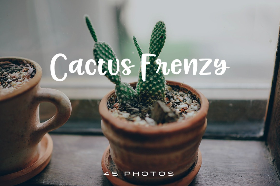 Cactus Frenzy photo pack 1