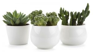T4U-Ceramic-White-Collection-300x168