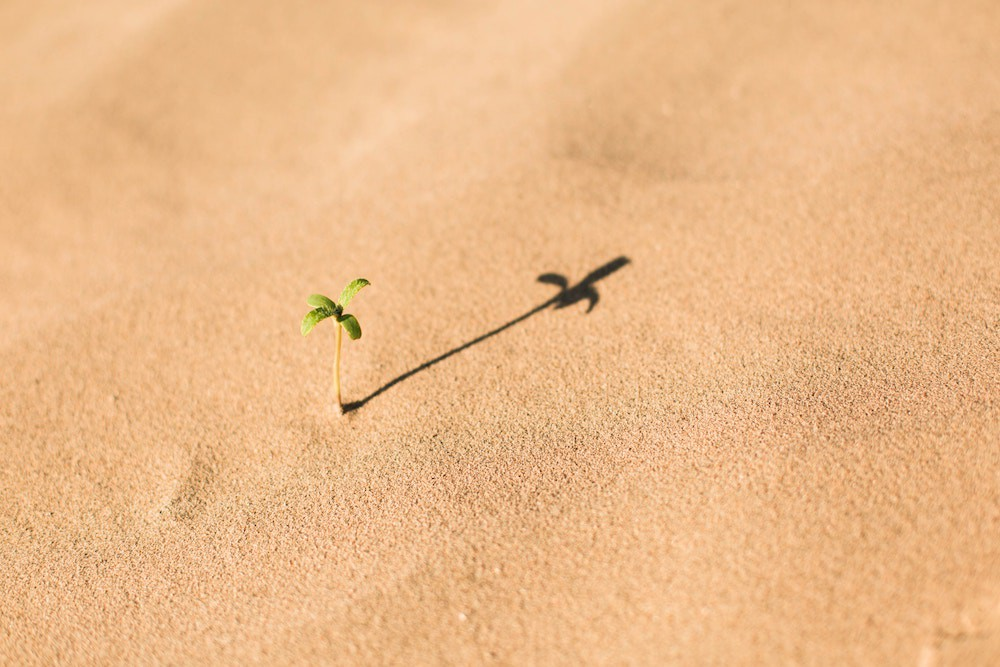 Small plant growing all by itself in a desert