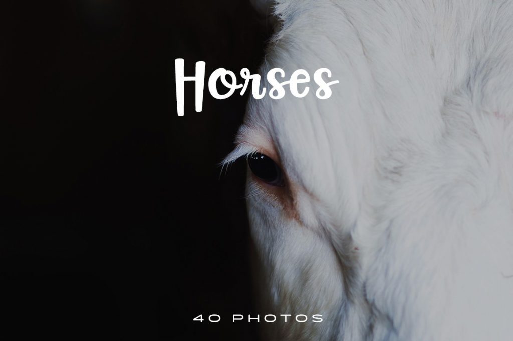 Horses are one of nature\'s most majestic creatures. Revel in their beauty in this amazing horse photo pack.