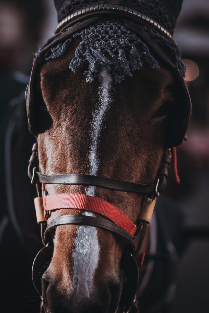 40 Free Stock Photos Of Beautiful Horses Fancycrave