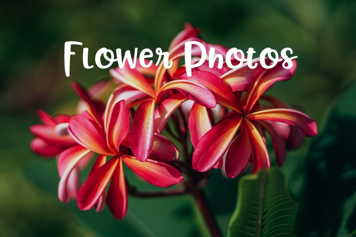 pictures of flowers