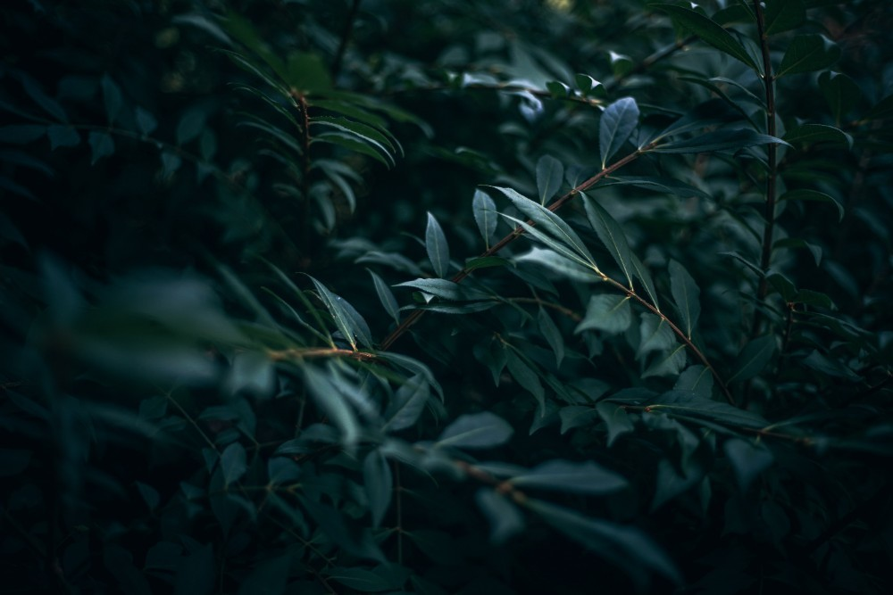 Awesome-dark-green-leaves-in-garden