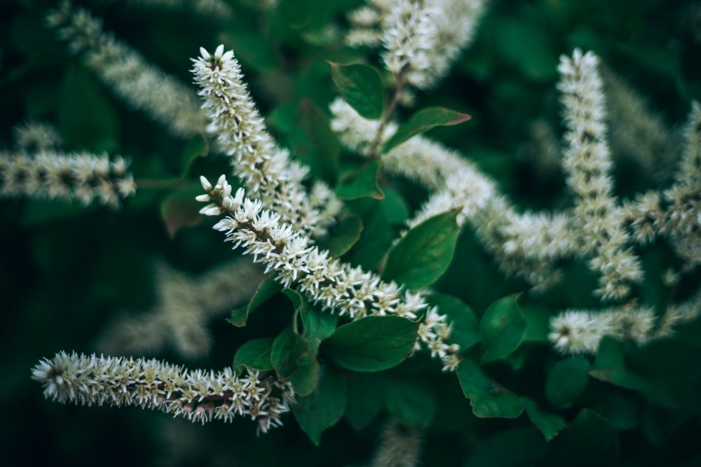 Beautiful Plant with White and Yellow Flowers