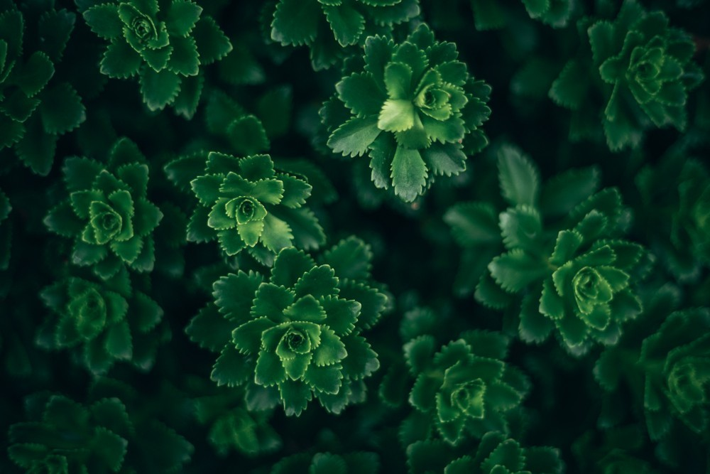 Macro-Shot-of-Neon-Green-Plants