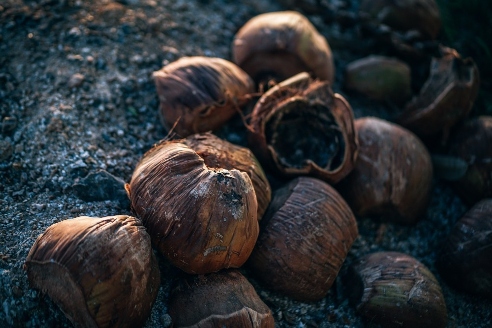 Close-up-Shot-of-Dried-Coconuts-on-the-Ground