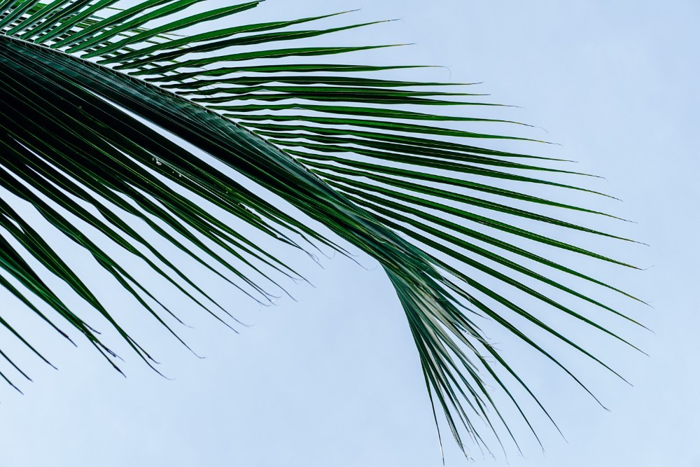 Cool Palm Tree Leaves and the Sky in the Background