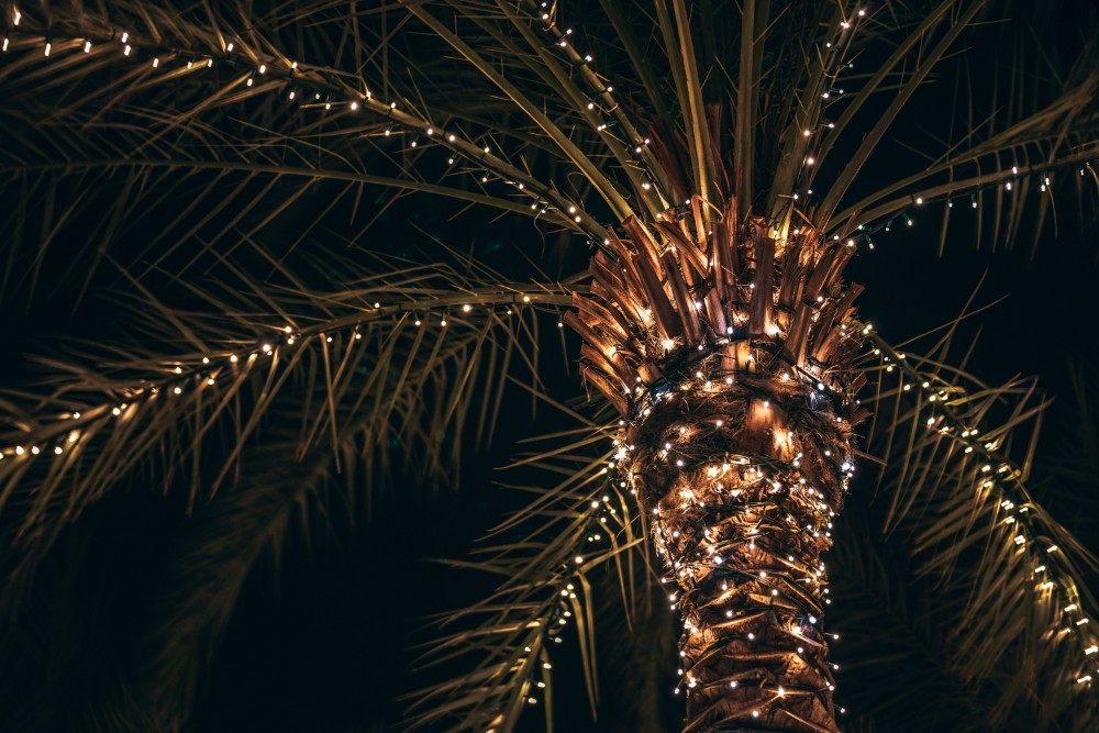 Palm Tree with many Lights on the Tree and the Leaves