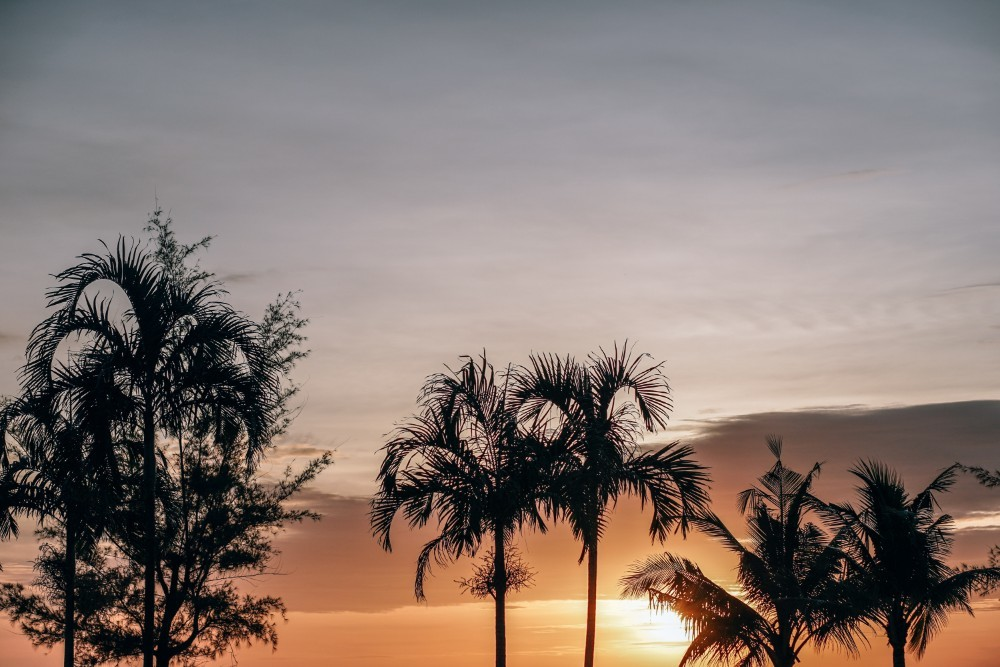 Sunset Photography Taken Behind Palm Trees