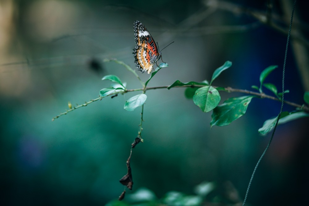 Warm-Colored-Butterfly-Sitting-on-a-Tree-Branch