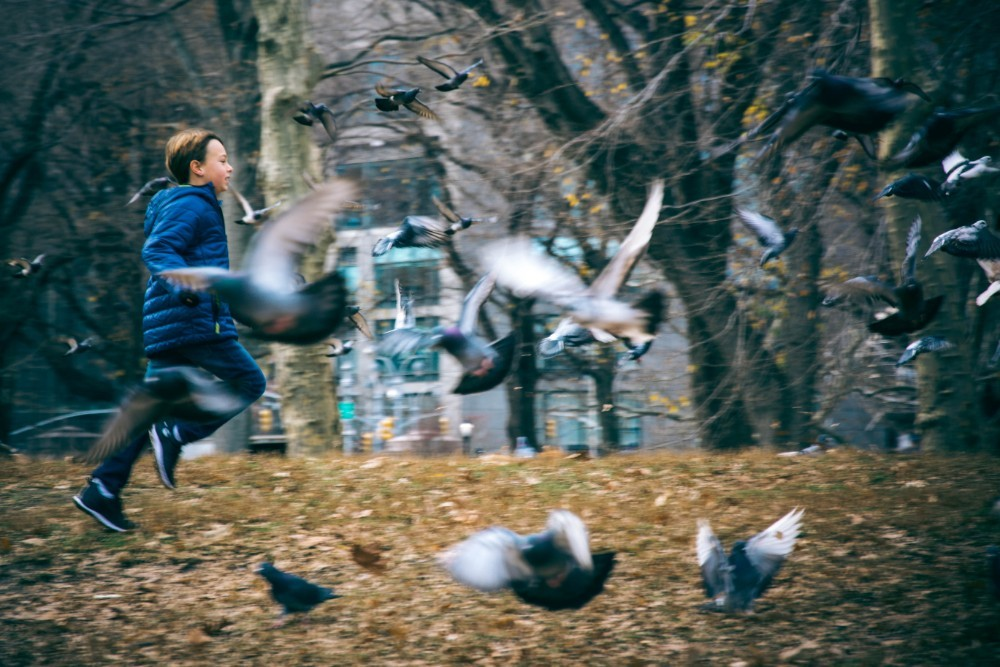 Awesome Shot of a Kid Chasing Pigeons in the Park