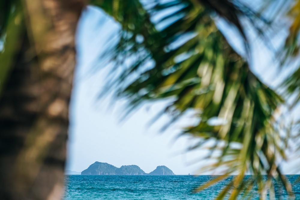 Three Islands Photographed Behind a Palm Tree
