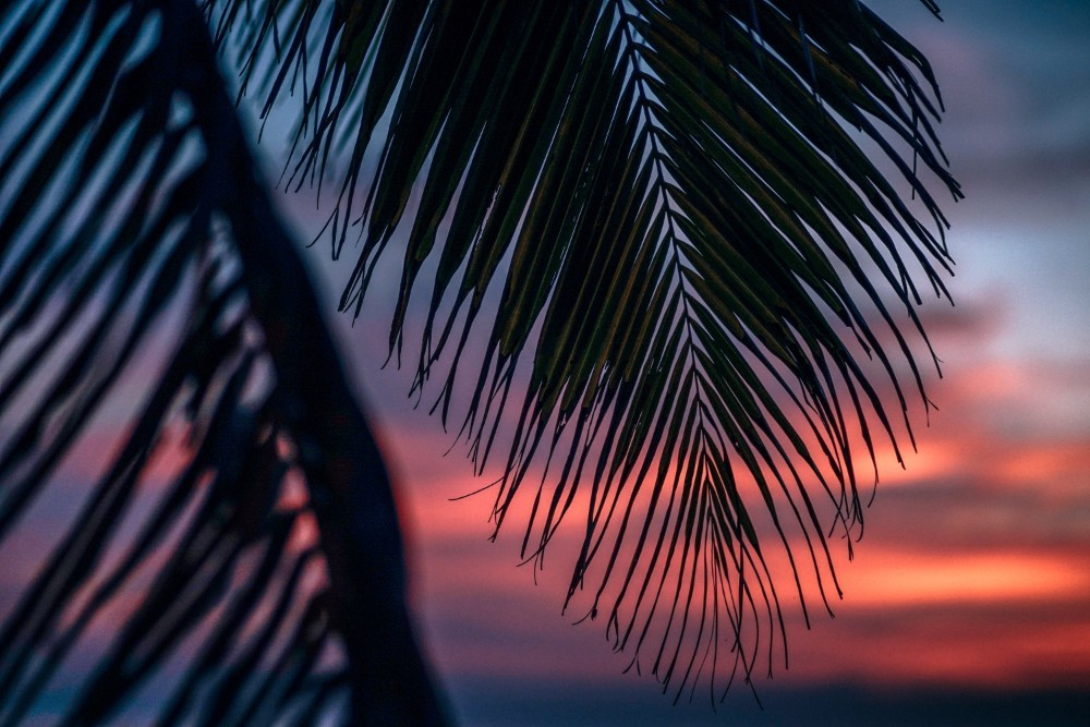 Tropical Branch with the Stunning Sunset in the Background