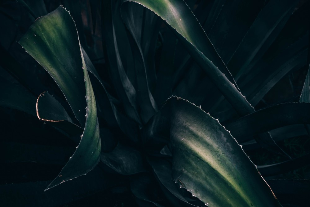 Close-up-Shot-of-Dark-Green-Leaves