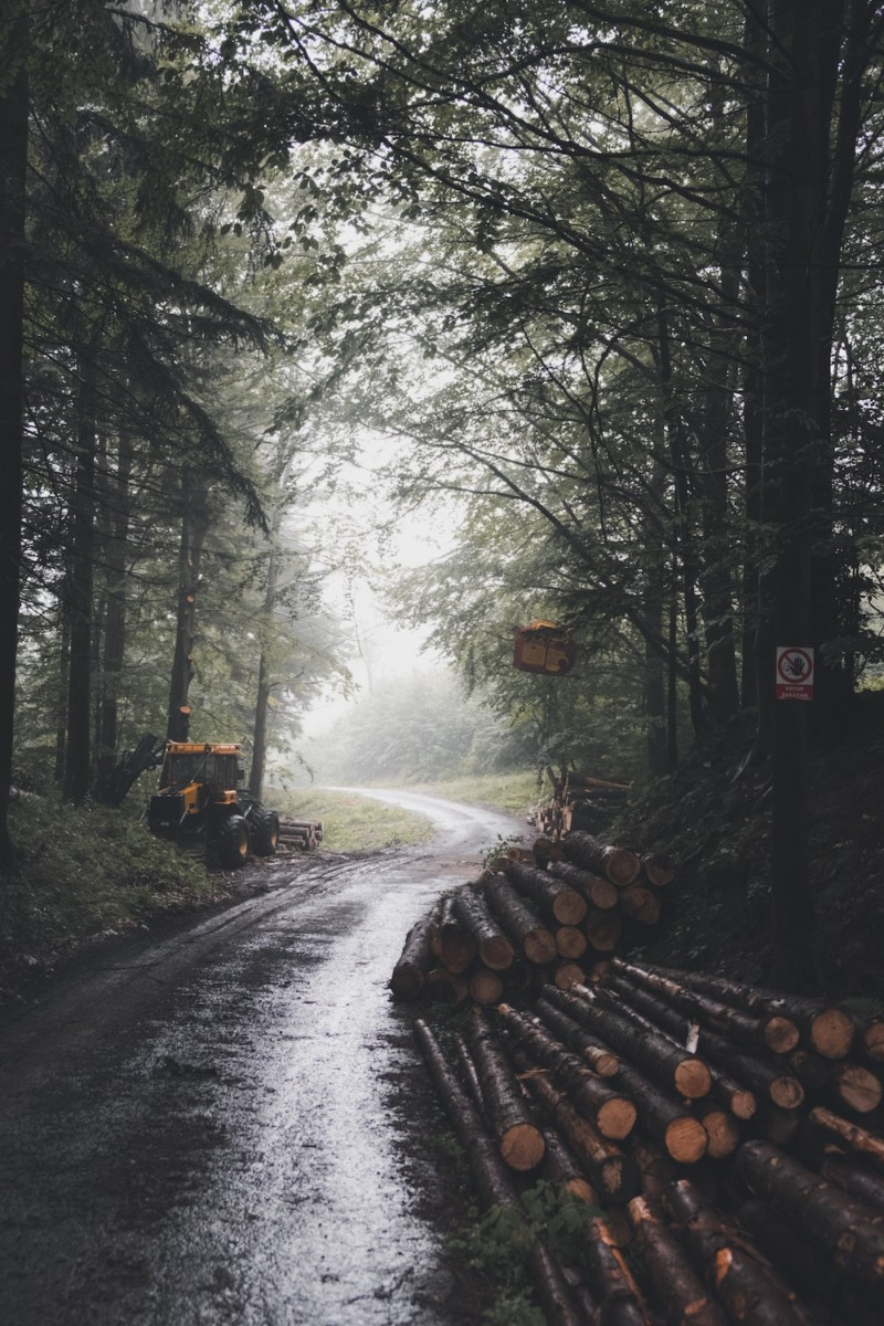 tree logs on road surround with trees
