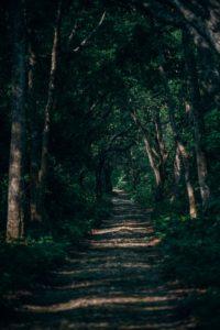 Beautiful Forest Path in Bardiya National Park