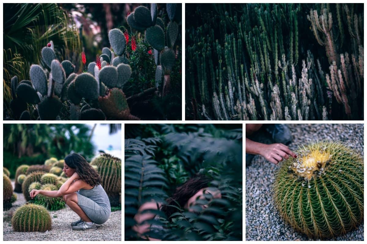 Cactus Park Preview