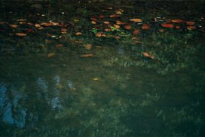 Colorful Leaves in a Small Pond at the Bardiya National Park