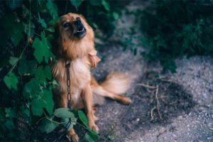 Dog Barking Behind a Tree