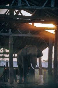 Elephant Nursery at a Nepali Village