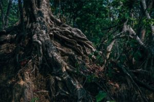 Massive Roots of a Tree