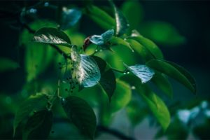 Morning Dew on Tree Leaves