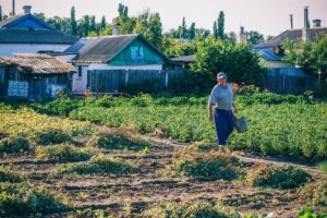 Old Man Carrying a Bucket in his Garden