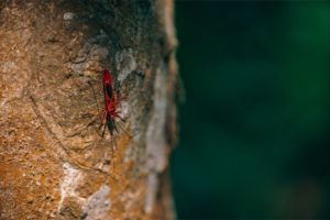 Red Insect Walking Down a Tree