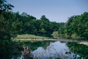 Small Lake at the Bardiya National Park in Nepal