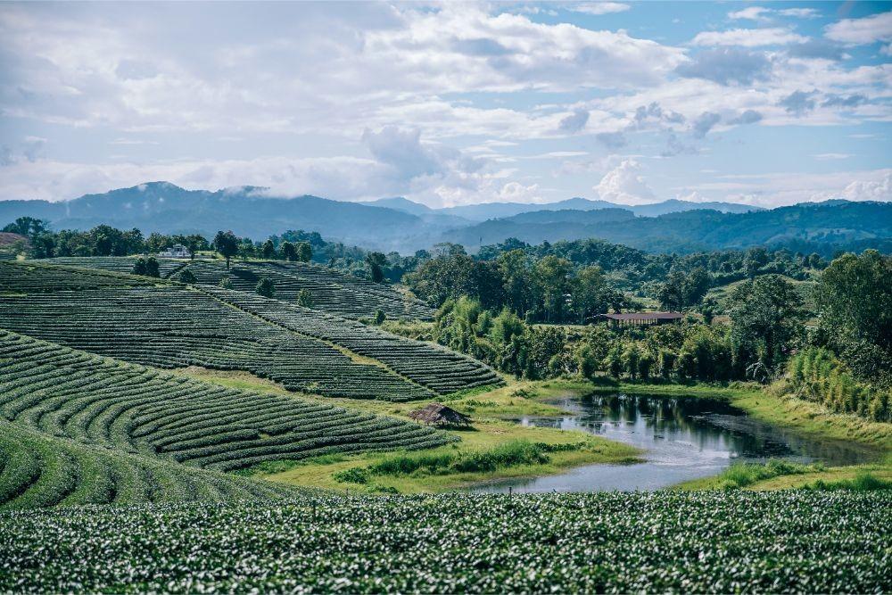 Small Lake at the Choui Fong Tea Plantation