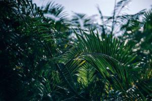 Tropical Greenery at a Nepali Village