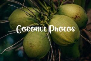 coconut picture