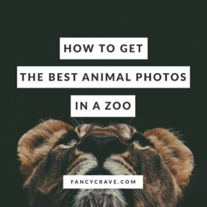 How To Get The Best Animal Photos In A Zoo