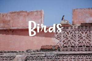 pictures of birds