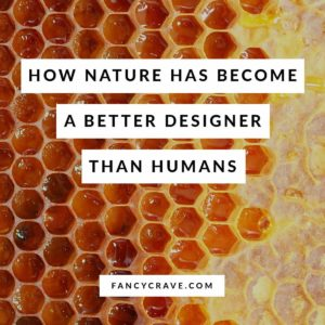 How Nature Has Become a Better Designer Than Humans