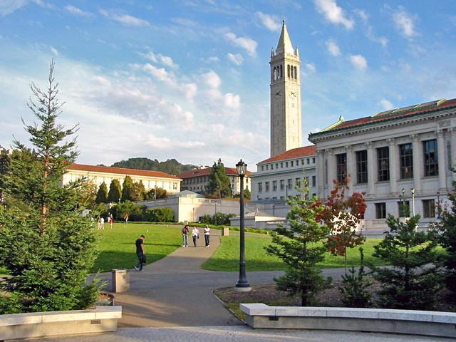 Berkeley glade afternoon