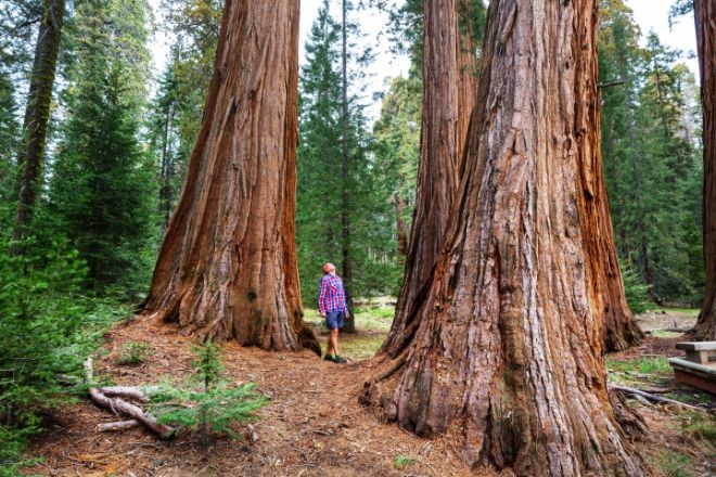 sequoia PXAVP