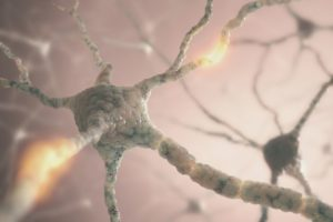 neurons PGPZMF