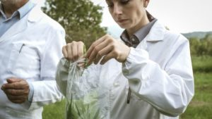 researchers collecting hemp plant samples in the XUHEQA
