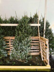 christmas tree min
