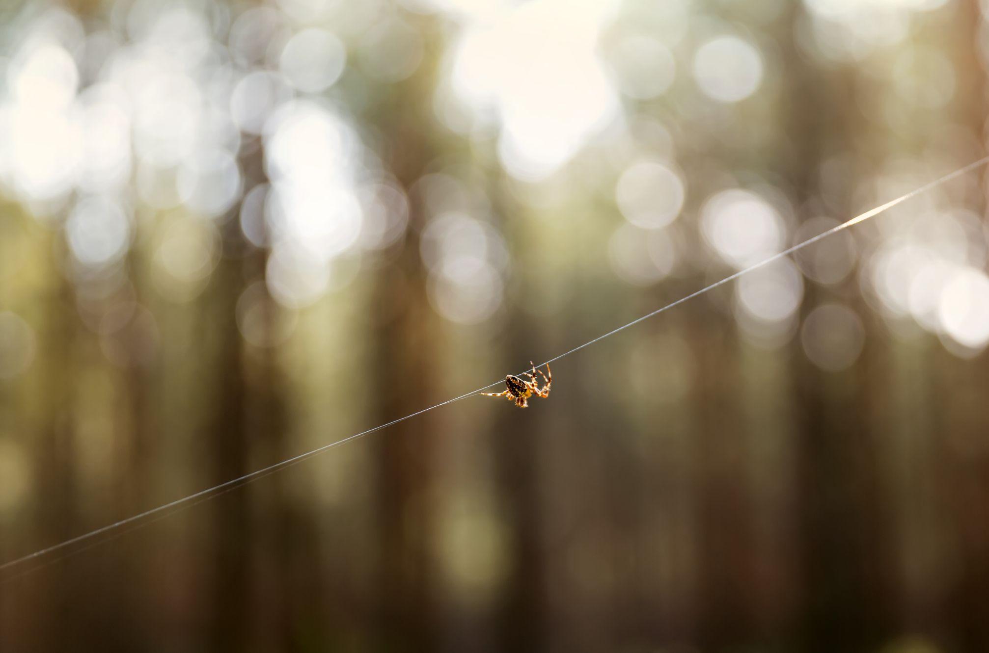 spider MRSZ